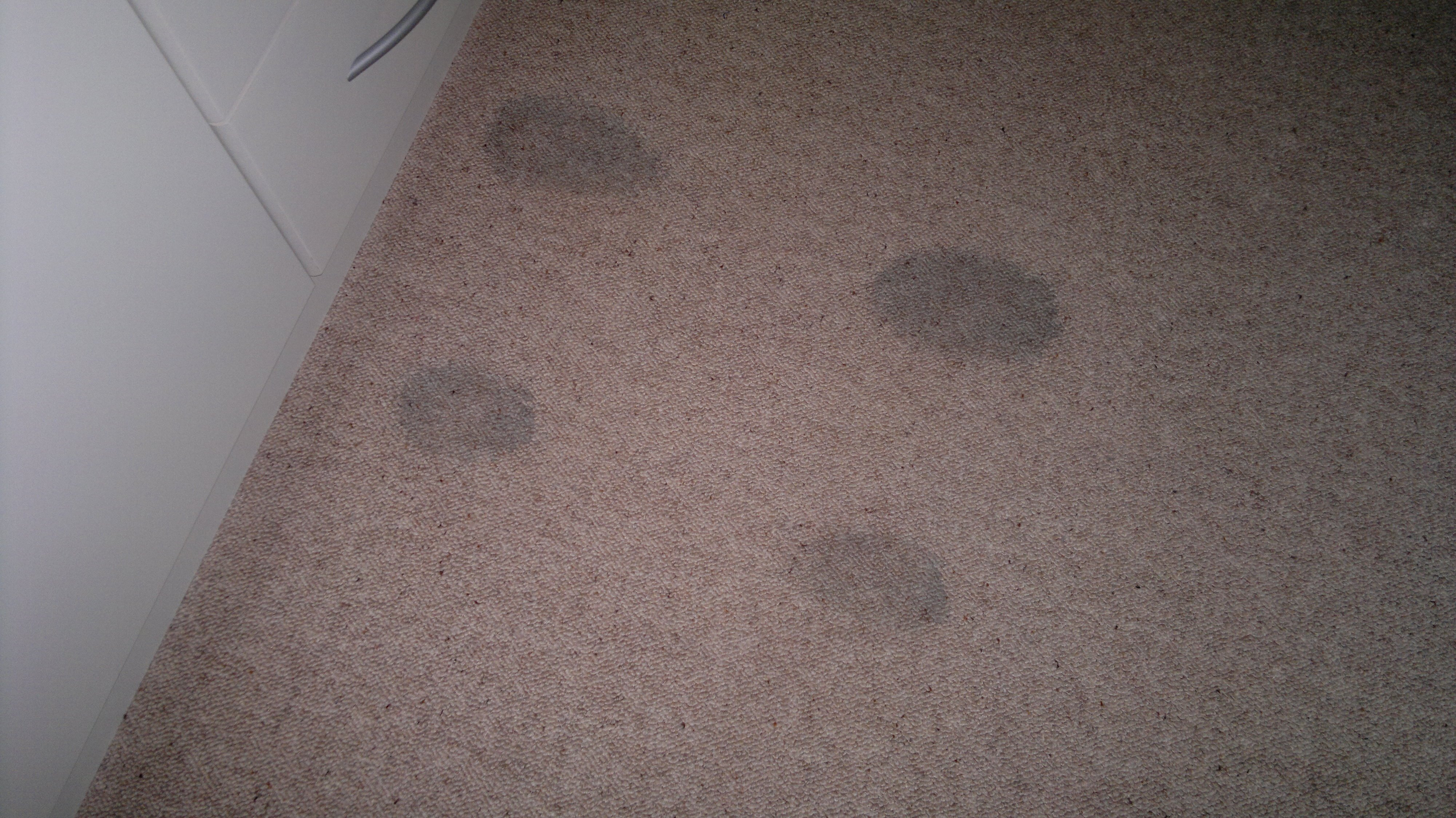 four dye stains on a wool carpet caused by wet clothes dripping onto the carpet